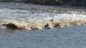 Surfing the tidal bore