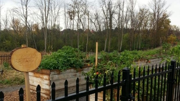 This community garden at Carleton University may need to move to make way for a planned new residence building.