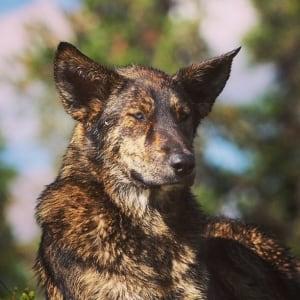 Dog 2 found dead near Melfort