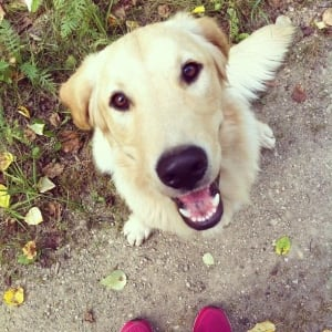 Dog 3 found dead Melfort