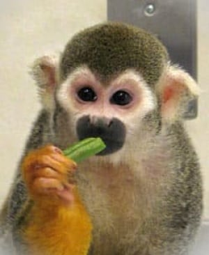 monkey-green-bean
