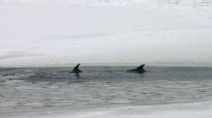 dolphins-cp-w-6275360