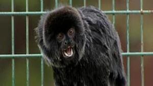 nb-monkey