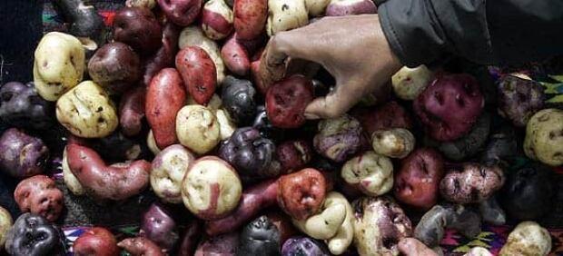 f-potato-peru-584-cp