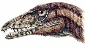 tp-dinosaur-tawa-head