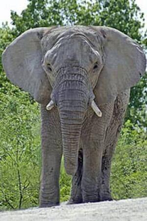 tara-elephant-zoo