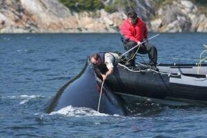 bc-090626-whale-rescue-584