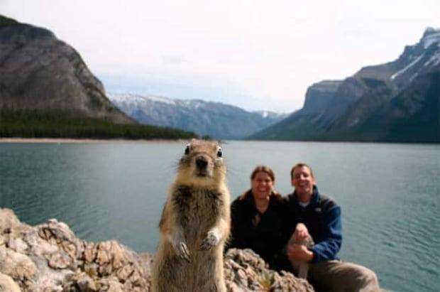 cgy-squirrel-brandts