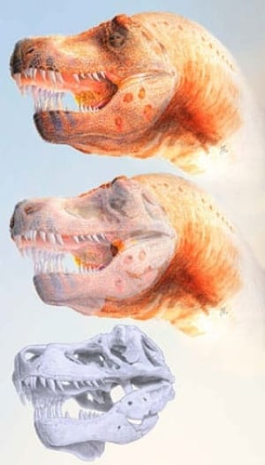 t-rex-sue-parasite-infectio