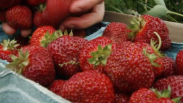The Strawberry Festival takes over the West End this weekend.