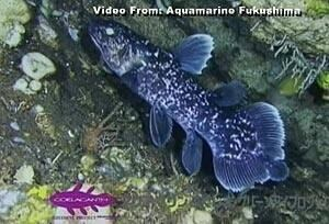 coelacanth-fish-cbc-300