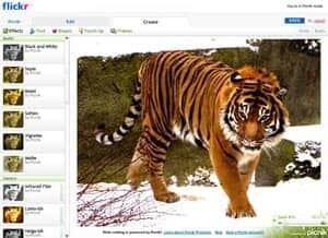 flickr-tiger-cp-3993757