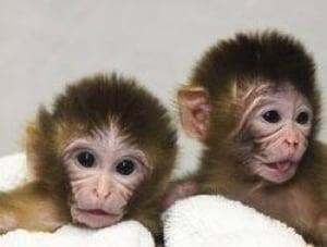 monkeys-dna090826