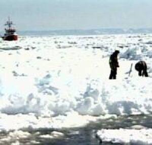 nl-seal-hunters-ice-2006fil