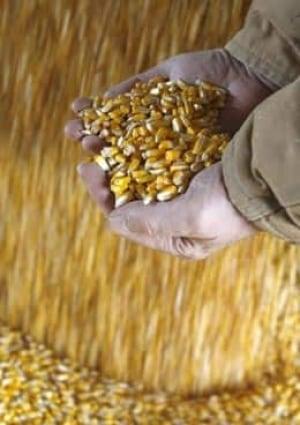 corn-cp-RTX69O3