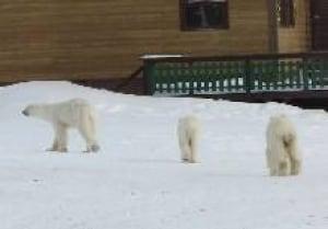 north-baton-bears080402