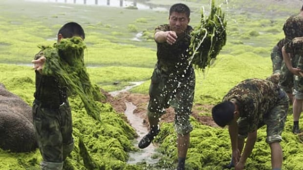 full-algae-cp-5128997