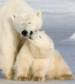 polar-bear-cp-3849643