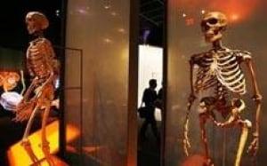 skeleton-cp-10402062306