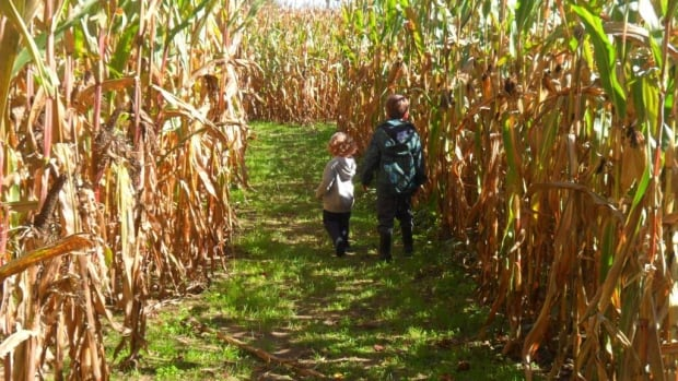 Exploring the corn maze at Parkside Farms in Waterdown. Debbie's photo is one of our Fall Photo Contest winners!