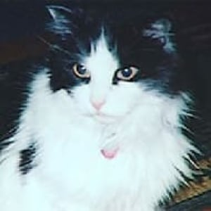 ot-slim-the-cat-070704