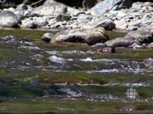 nb-river