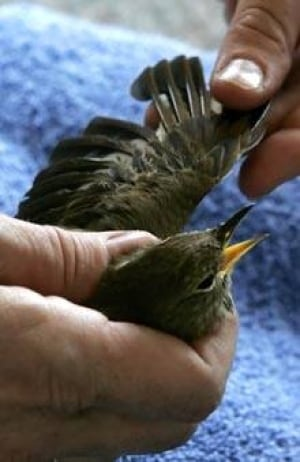 bird-dna-cp-070219