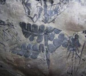 fossil-rainforest-cp-2838725