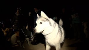 Dogs at dog vigil