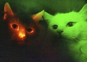 glowcat-cp-4045830