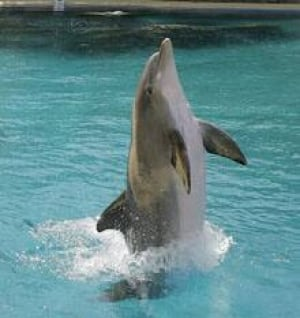 dolphin-cp-10152027