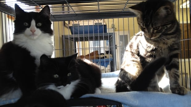 Nearly two years after taking over the Sydney animal shelter following allegations of animal neglect, the Nova Scotia director of the SPCA has given the shelter a glowing review.