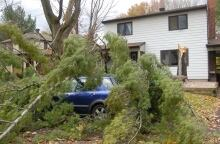 High winds tree downed car Bedford Crescent