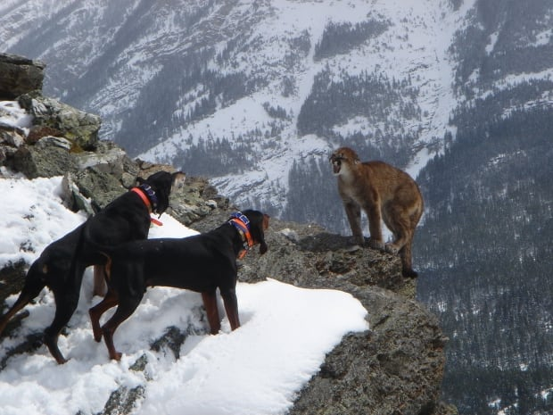 Vancouver Dog Friendly Mountians
