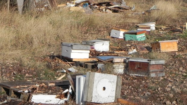 RCMP are looking for suspects after seven buildings and a bee farm were trampled by someone driving a tractor in Gladstone, Man.