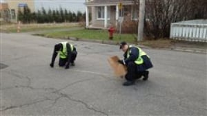 QC hit-and-run investigators