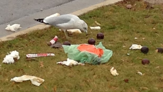 A bird enjoys the remains of incorrectly sorted trash Tuesday.