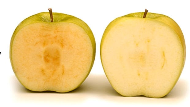 The Arctic apple on the right, does not brown like the conventional apple on the left, because the genes which produce polyphenol enzymes have been silenced, meaning the chemical reaction that leads to browning does not take place.