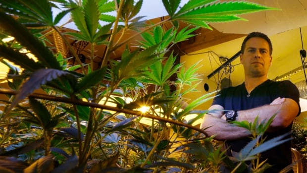Brent Miller poses for a photo in one of the grow rooms of his medical marijuana grow operation in Seattle.