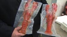 Pasteurized lobster