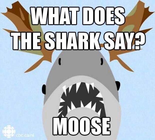 What does the shark say? Shark meme