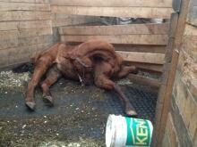 Dead horse investigation