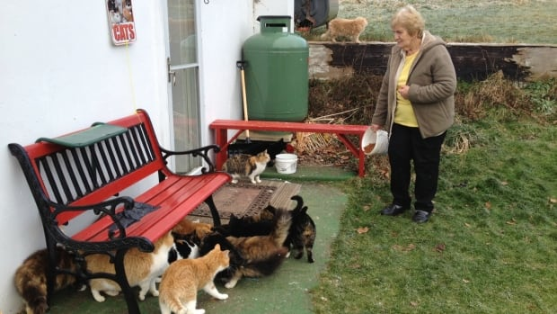 Jackie Hindle feeds the numerous feral cats that come to her door every day.  She's trying to raise awareness about the huge feral cat problem in the Cape Breton Regional Municipality.