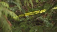 Police tape woods - wooded area - forest