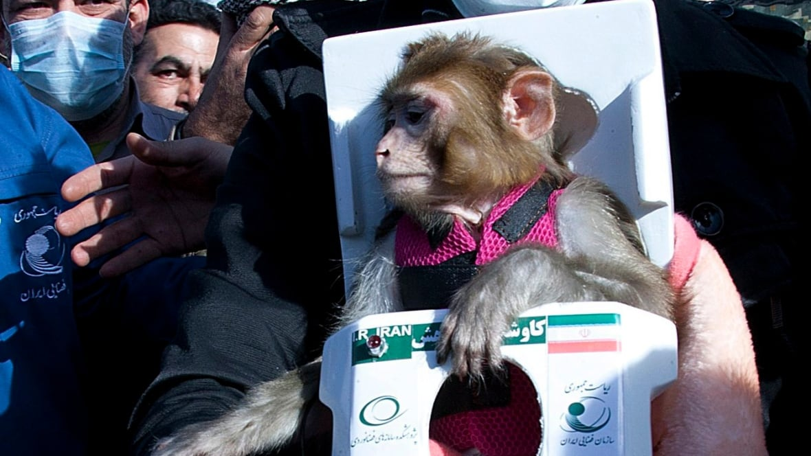 Monkey Sent Into Space Again Says Iran Technology