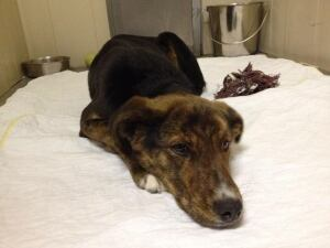 Coco, warm and safe at Prince Albert SPCA