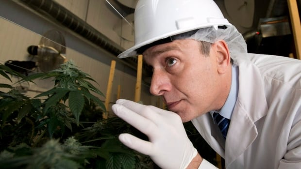Mark Gobuty, Founder and CEO of The Peace Naturals Project, is one of the first to be approved by Health Canada to commercially produce and distribute dried cannabis.