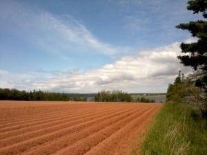 P.E.I. potato field