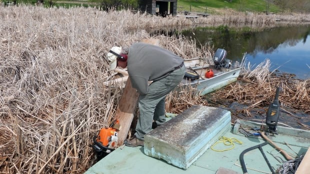 A Laurenson Lake resident cuts through a section of floating cattail marsh to clear a path to Lake of the Woods in May of 2013. The root mass of the floating mats are about two feet thick.