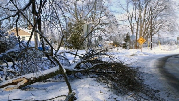 Downed branches litter the Millgrove community after last weekend's brutal ice storm. The number of Hamilton households without power is slowly dropping and the remaining few can expect power to be restored by Friday night.